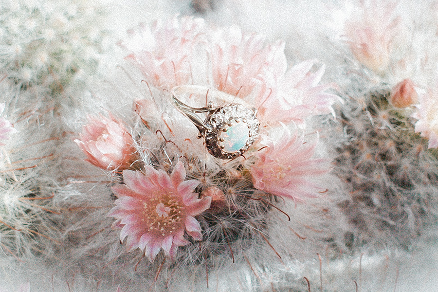 Wedding ring on cacti by Hanne Brooks Photography